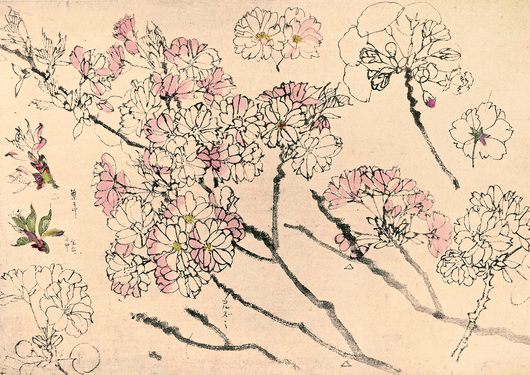 Cherry Blossoms - Drawings by Japanese Artists - print WEB.jpg