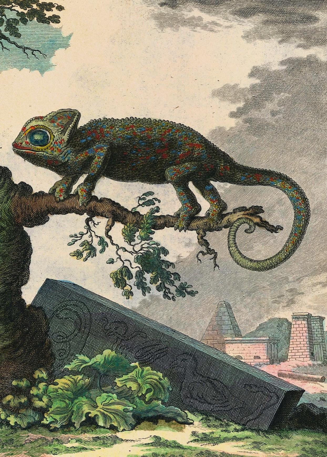 'Histoire Naturelle', Comte de Buffon