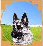 logo-associazione-pastori-tedeschi-rescue-o.png
