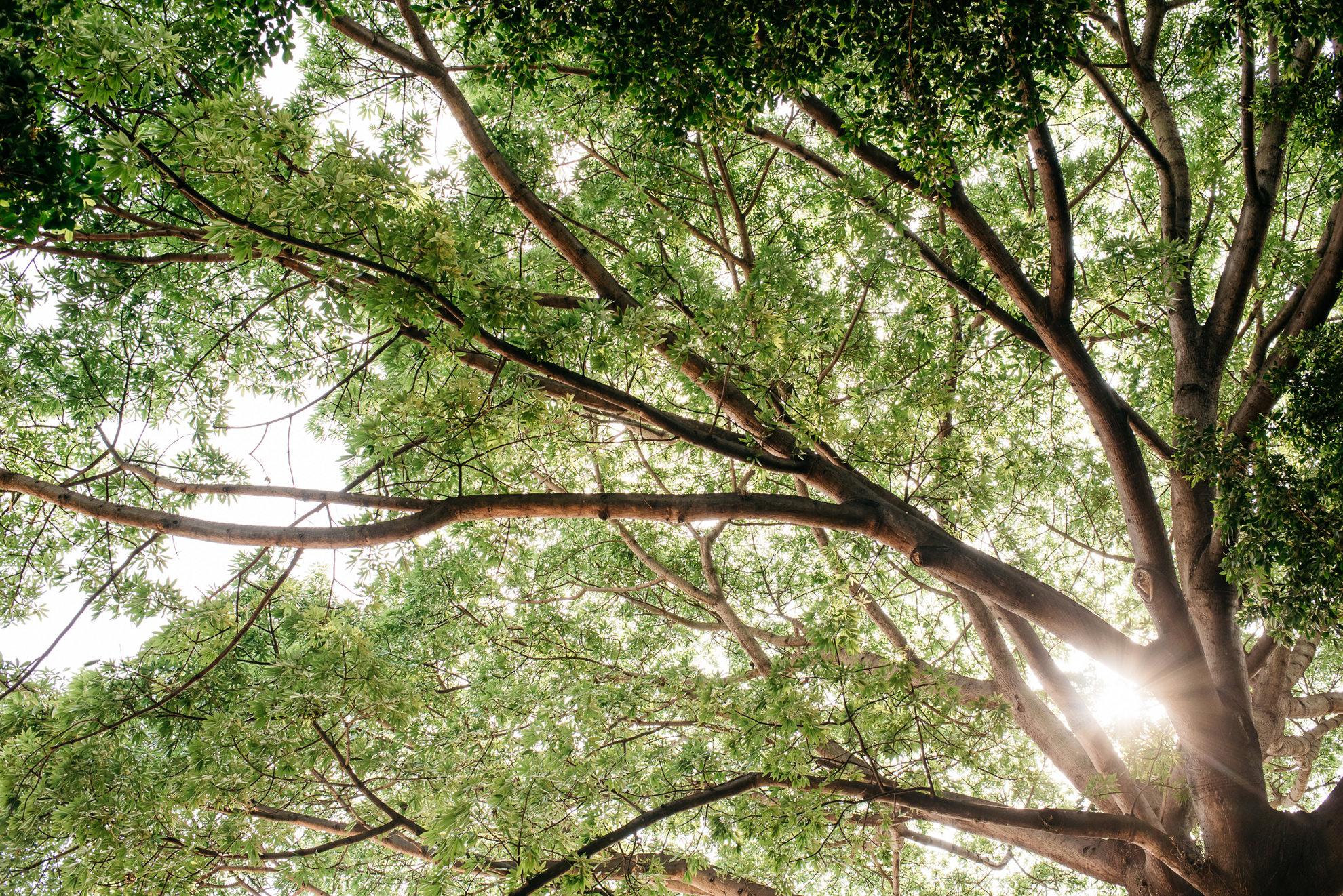004 - hacienda san carlos.jpg