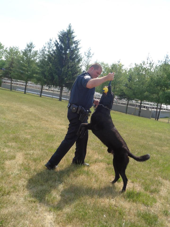 Dog Training Demos -