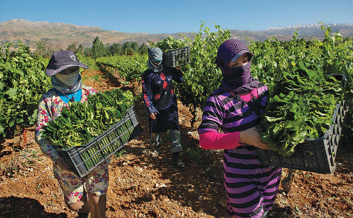 fleeing syria to farm - Modern Farmer, September 12, 2013