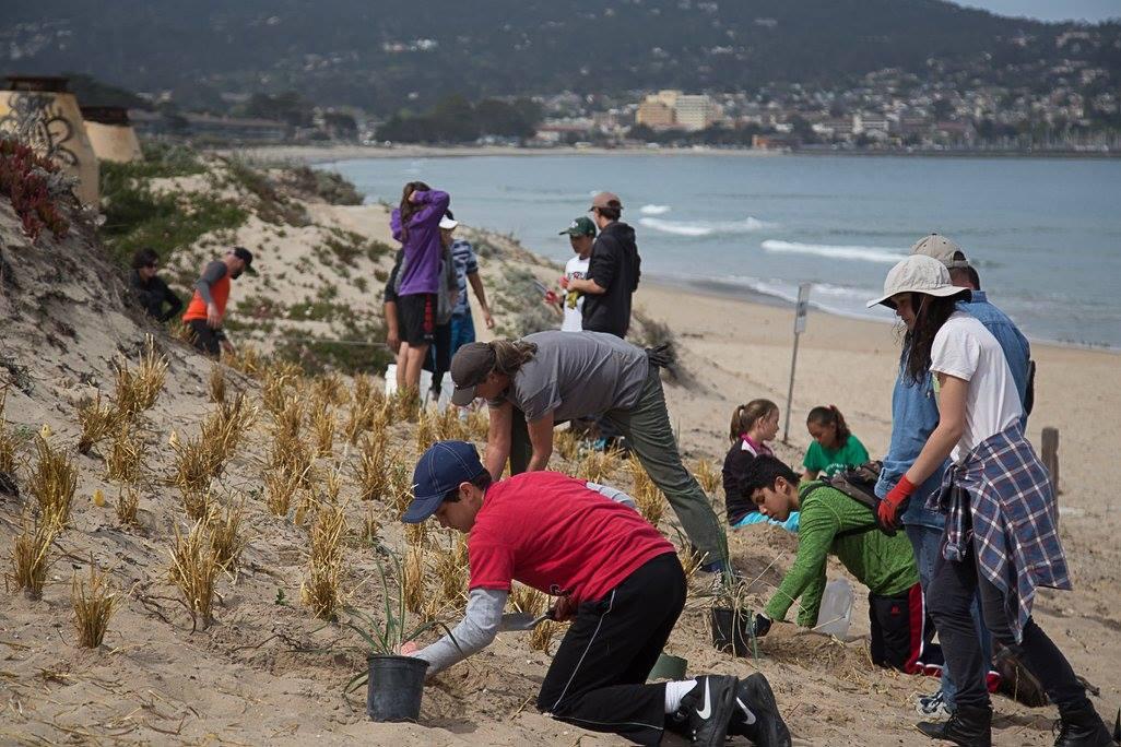 Point Lobos - Stabilization.jpg
