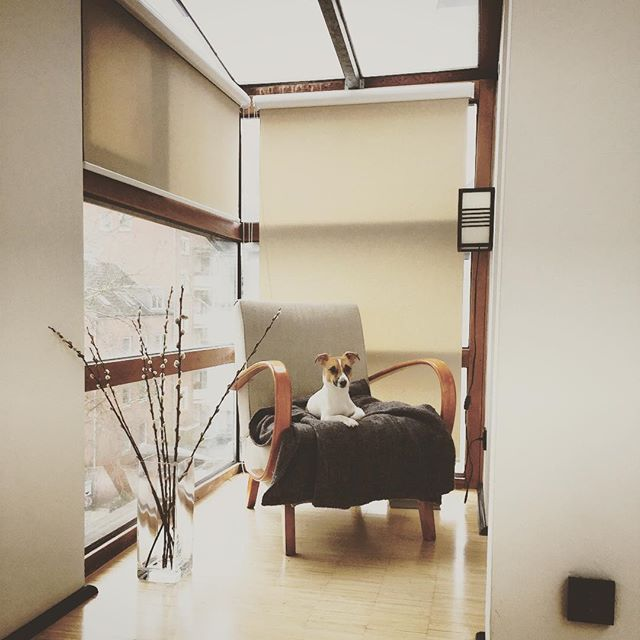 Weekend feelings  #jackrussell #jackrussellterrier  Alana Flick Interiors Innenarchitektur @alana_flick_interiors www.alanaflick.net #interiorarchitecture #interiordesign #hospitalitydesign #alanaflick #hamburg #innenarchitektur #hotel #bar #restaurant #retail #spa #bemyguest #apartment #wohnung #innenausbau #renovierung #renovation #design #furniture #cafe