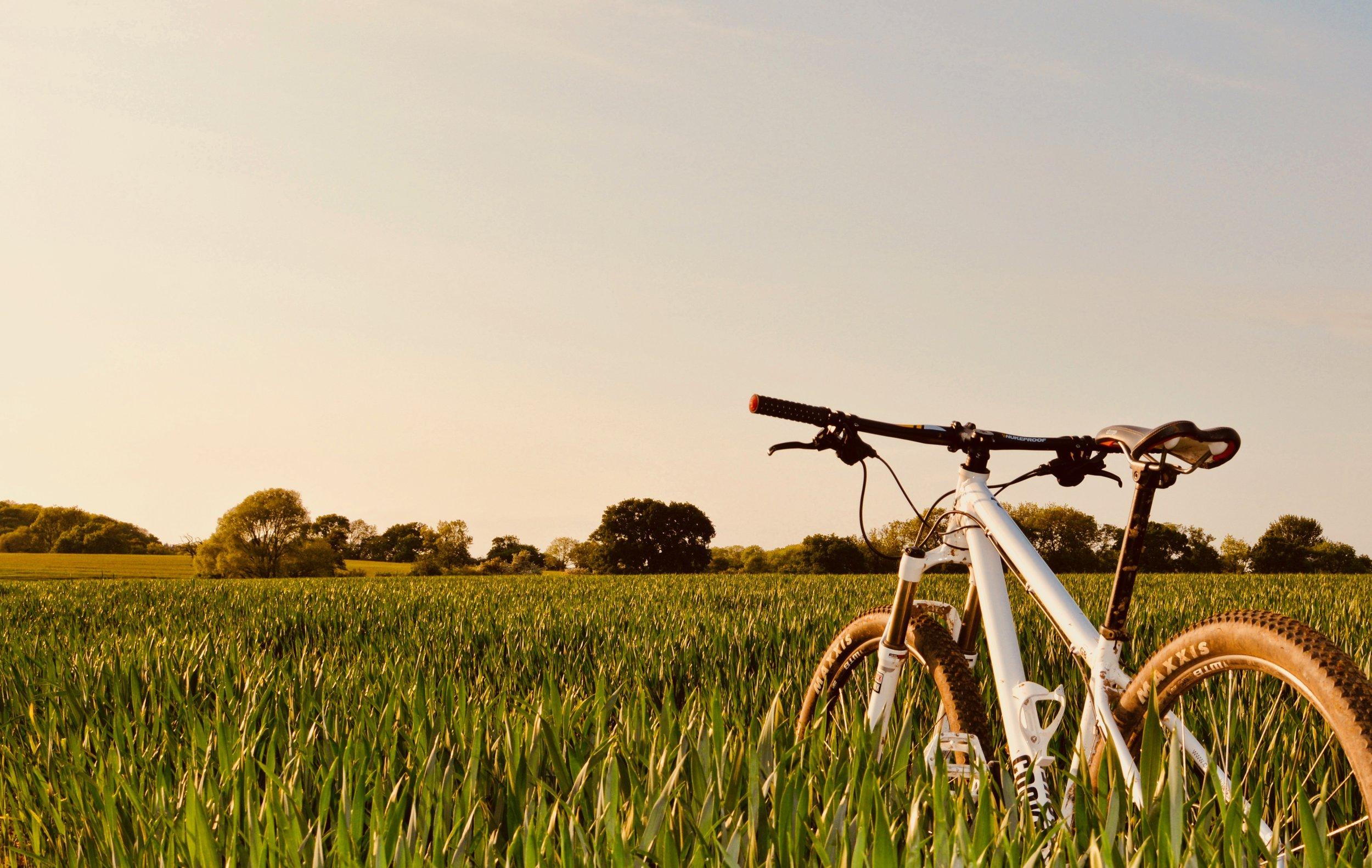 Bike field.jpg
