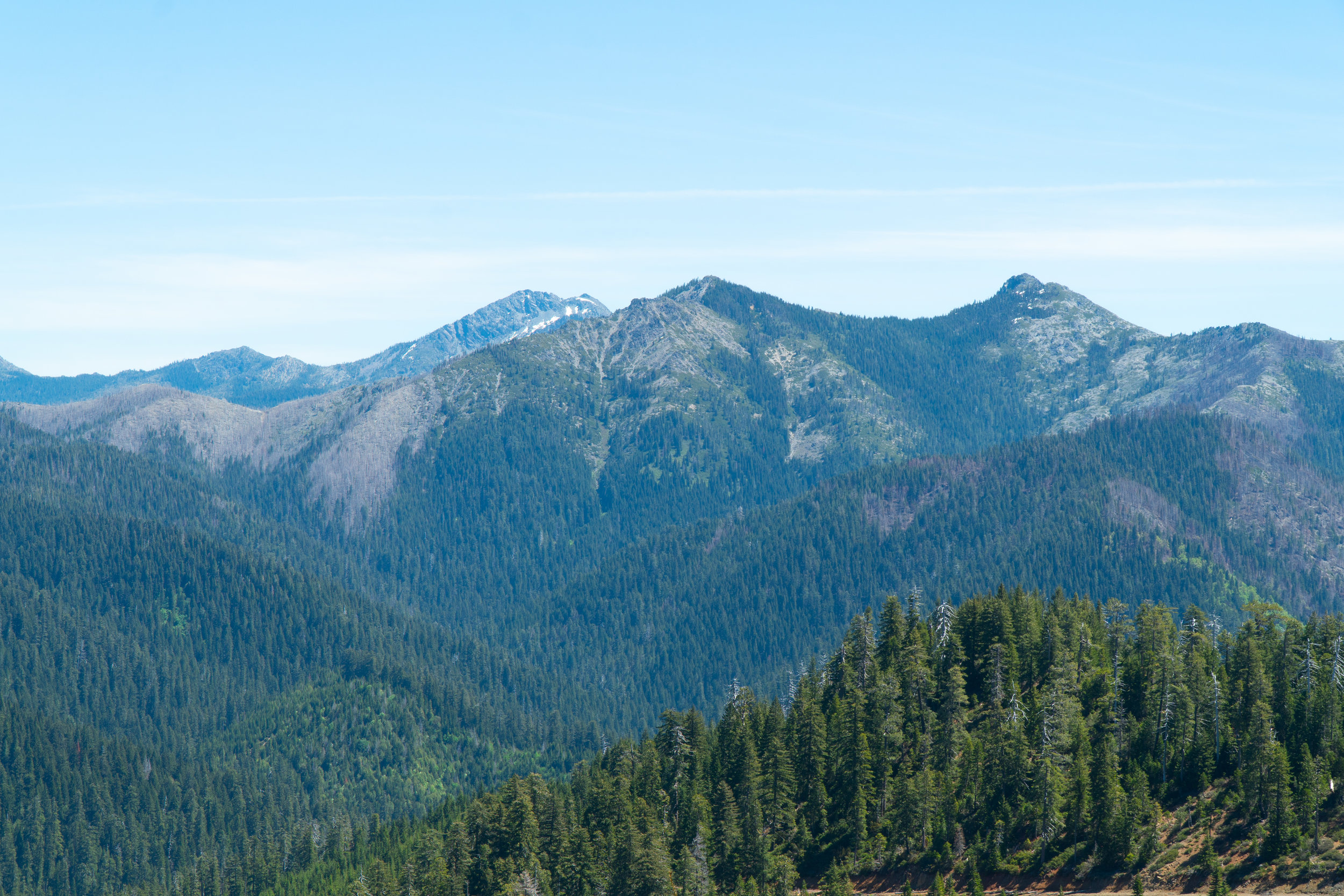 Sprawling forests in the Smith River National Recreation area