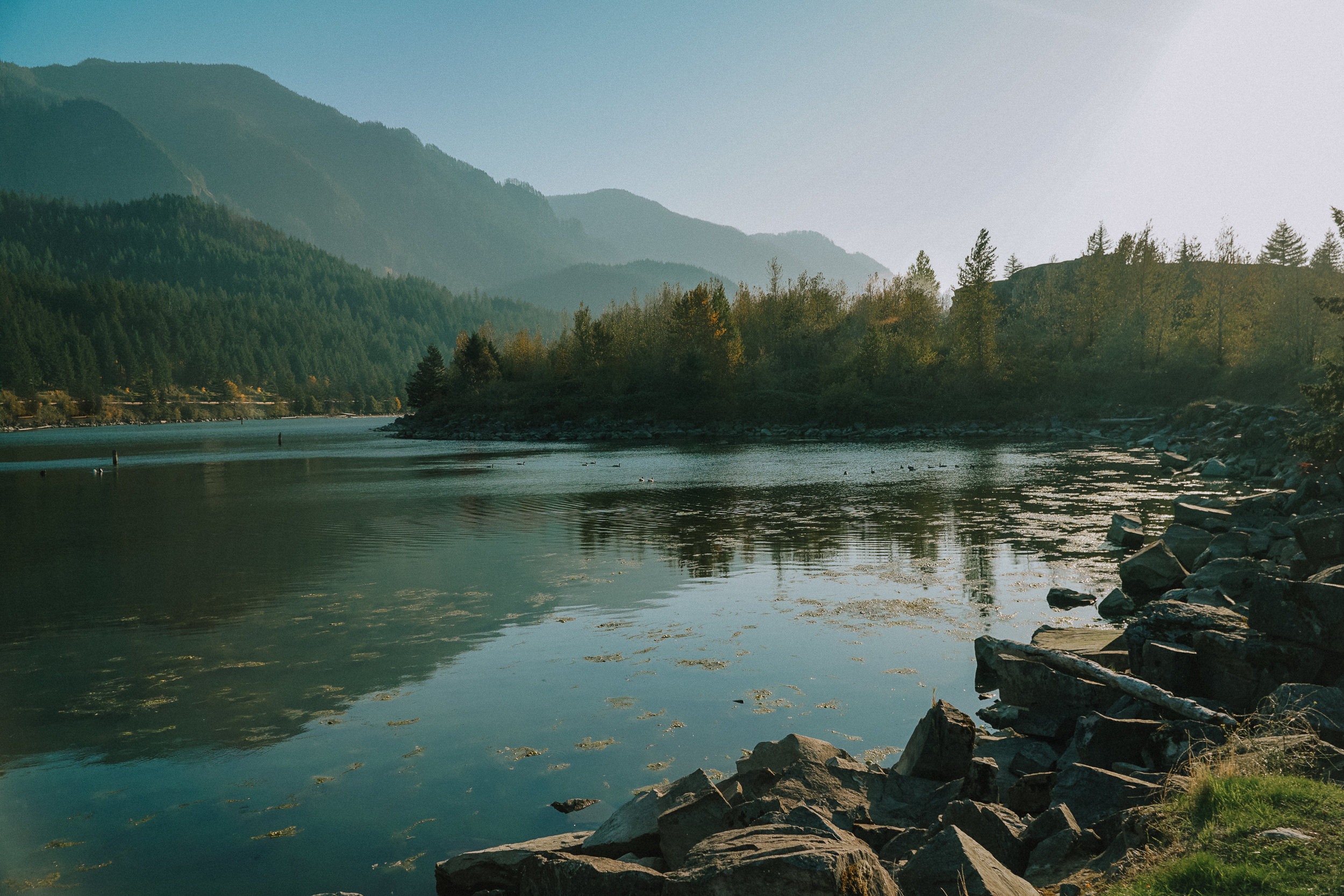 Anchor and Pine_Columbia River Gorge_Oregon_Engagement_Photography.jpg