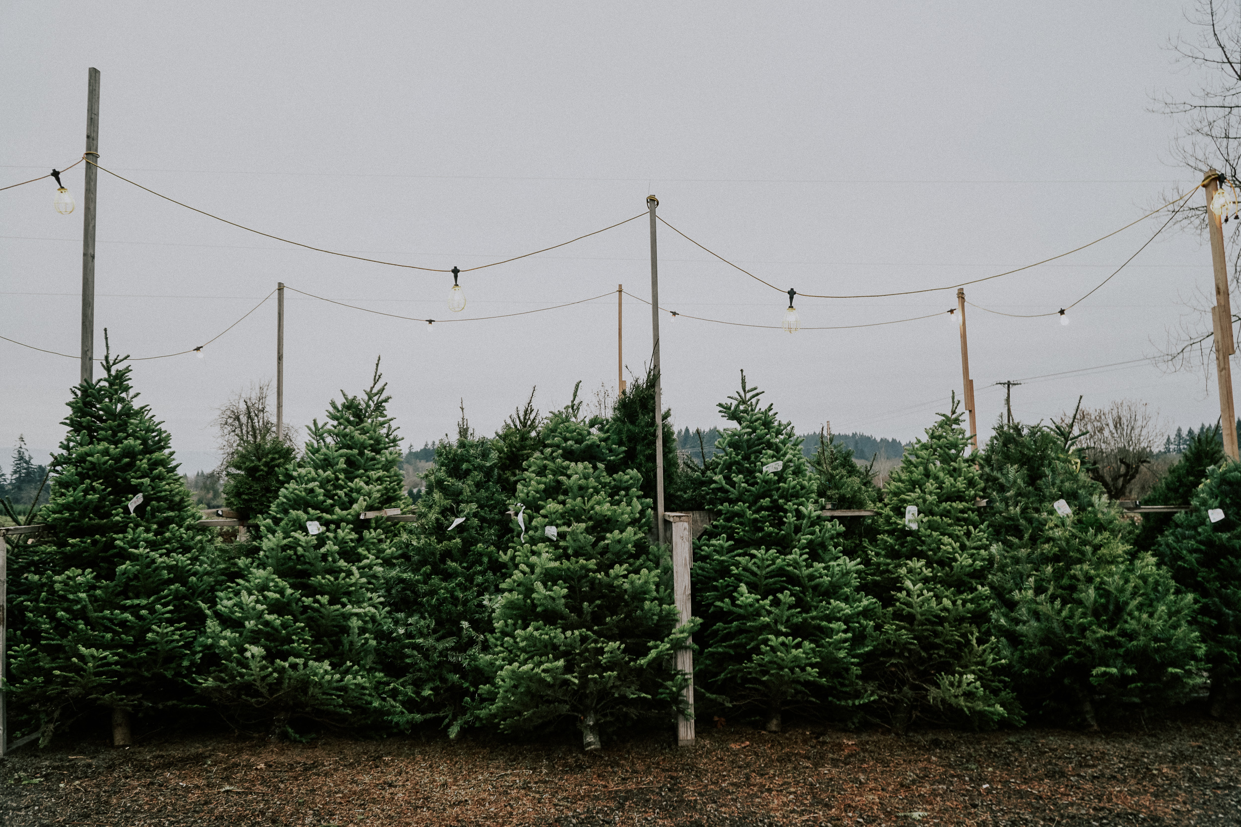 Portland Oregon Tree Farm Wedding Photography 1