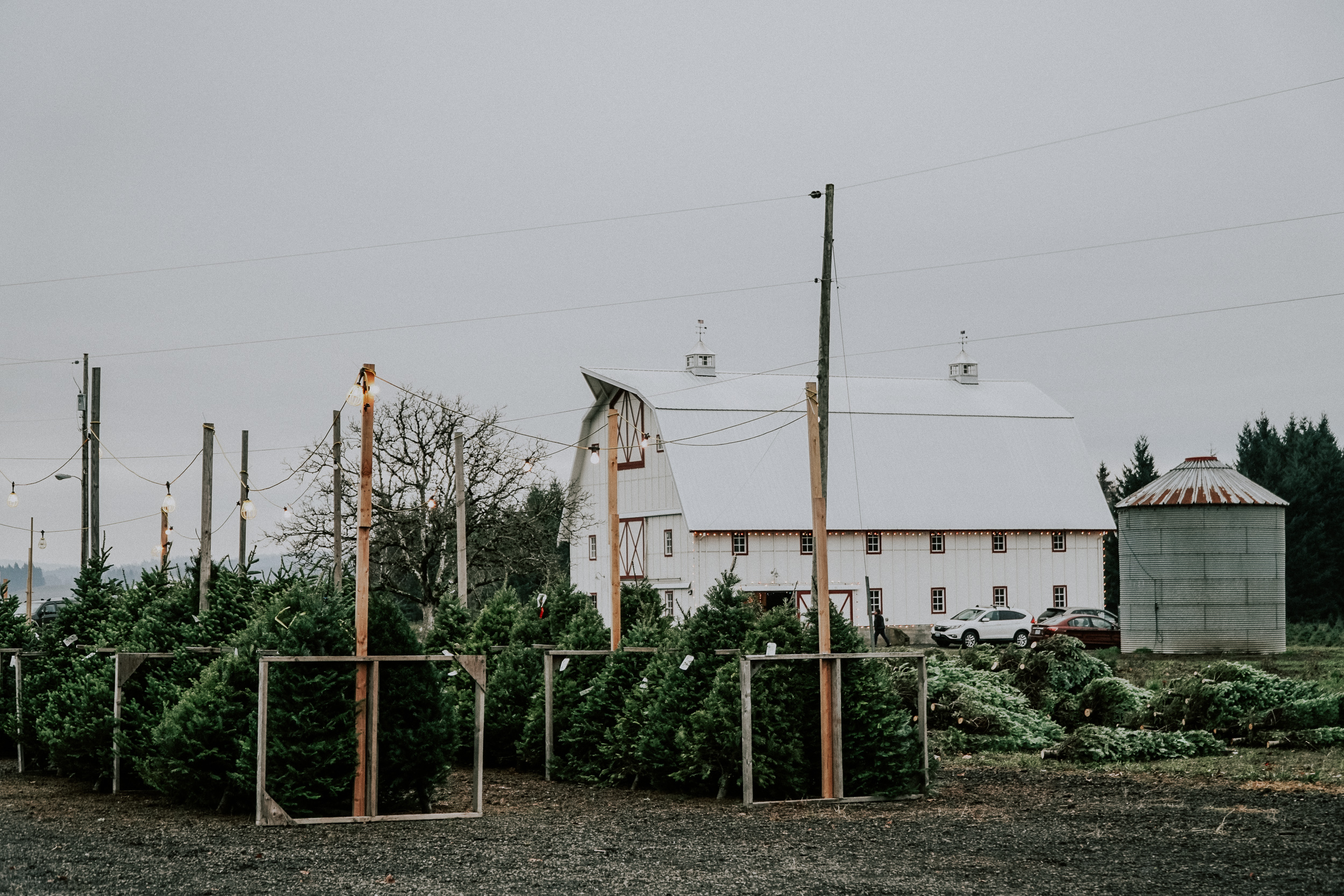 Portland Oregon Wedding Photography Tree Farm