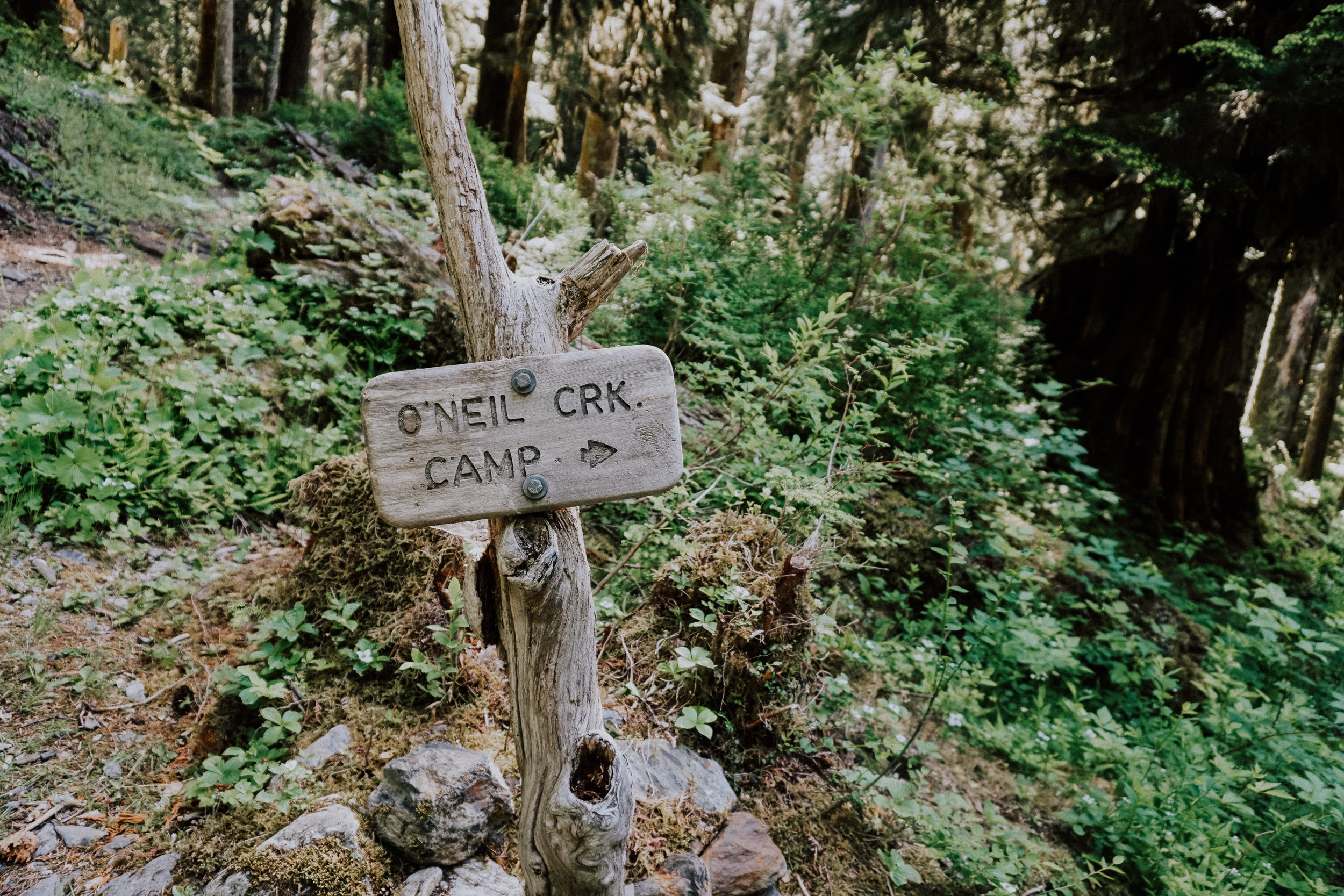 Enchanted Valley Trail Olympic National Park