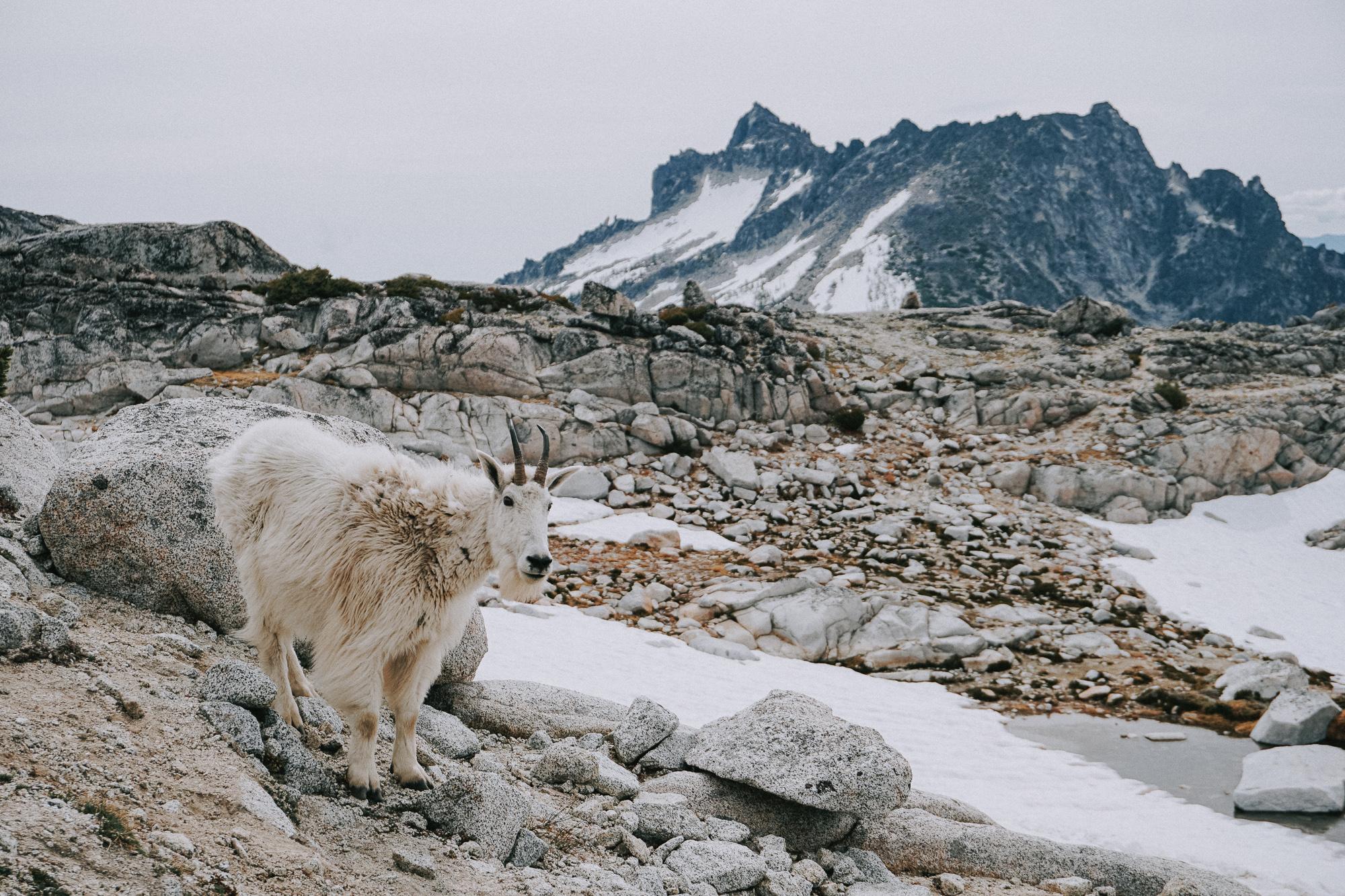 Alpine Lake Wilderness The Enchantments Trail