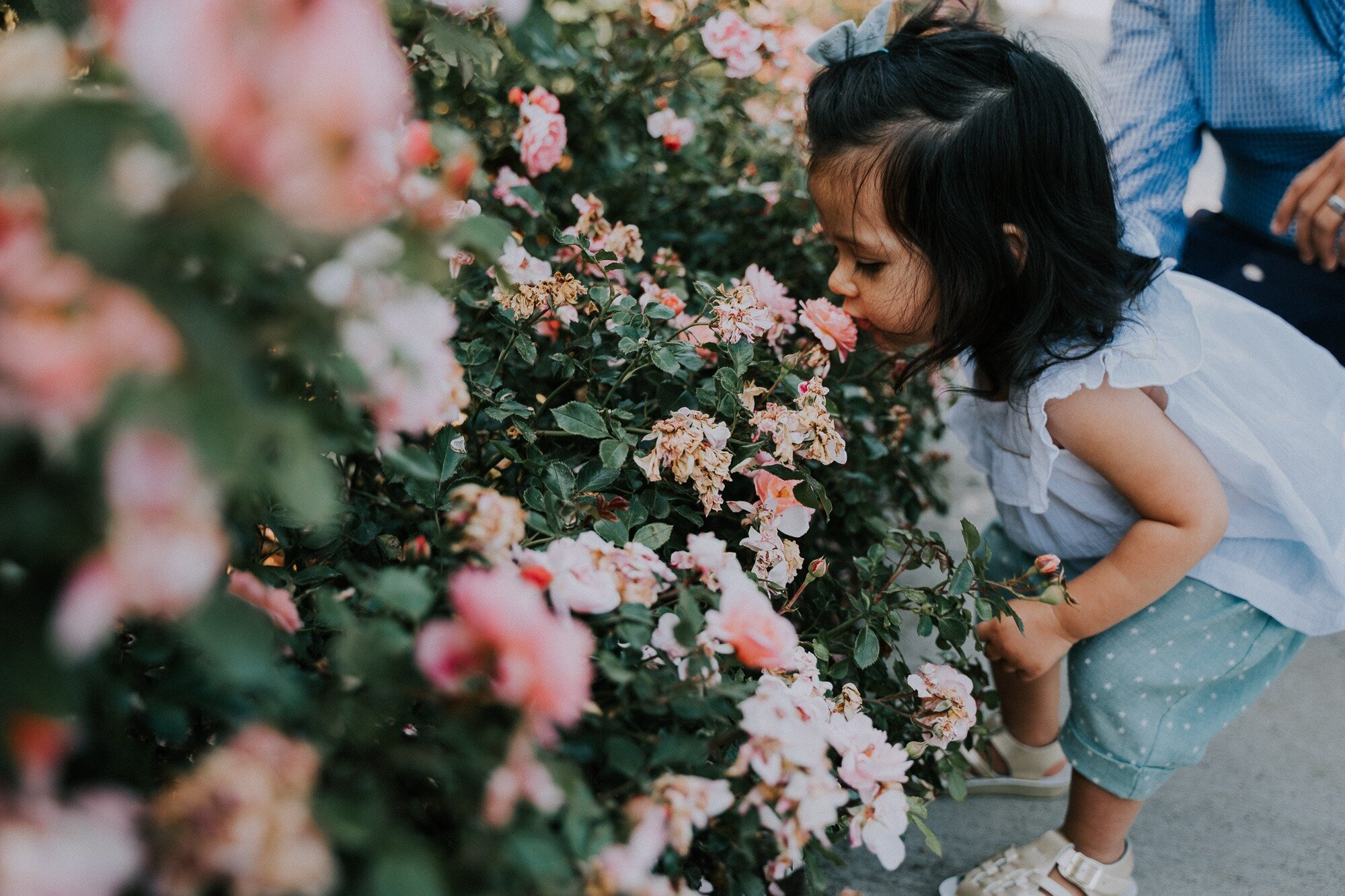 A Rose Garden Family Session - Two families, roses, and a good time // Portland, Oregon