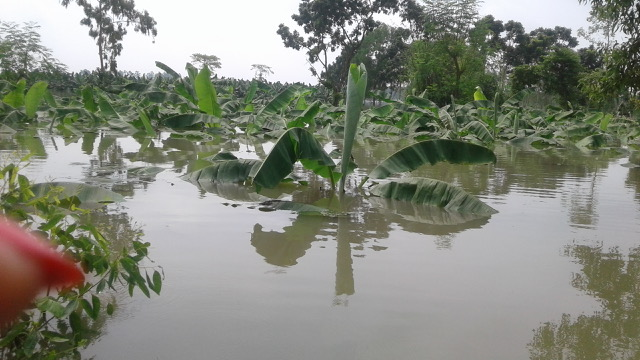 courtesy-of-BNM-the-floodwaters-in-Bangladesh-reached-the-top-of-the-banana-trees.jpeg