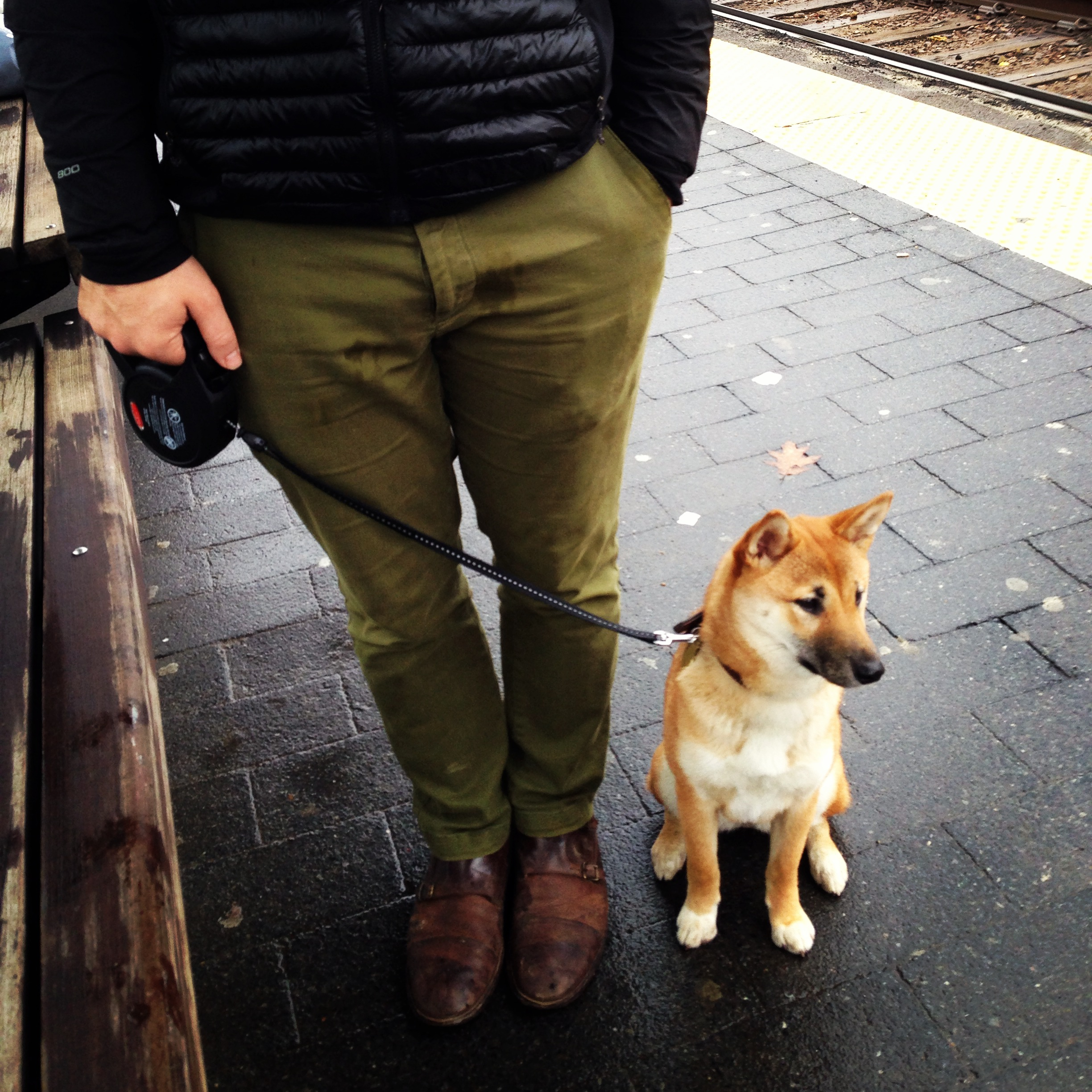 Me and Maple, my Shiba Inu (it all makes sense now!) And yes, the orange in the app was pulled directly from her fur. :)
