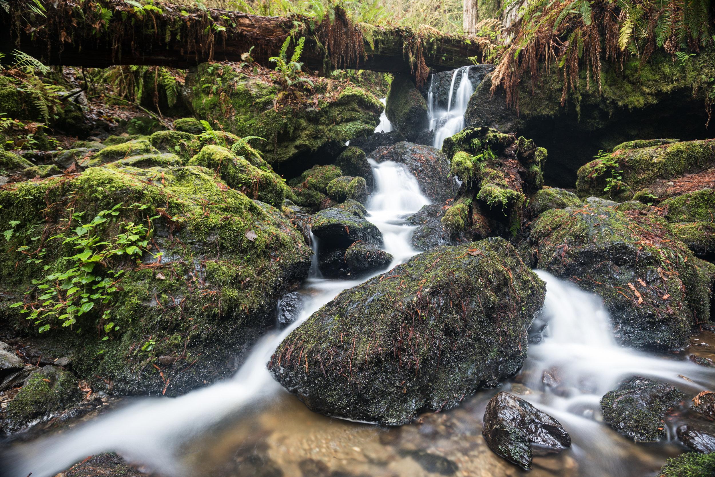 Trillium Falls, Redwood National Park, California [December, 2017]