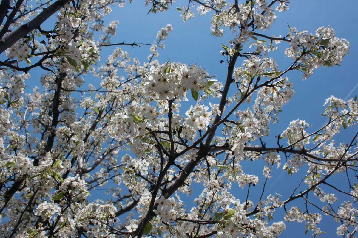 Spring is here in Cincinnati. Maybe...