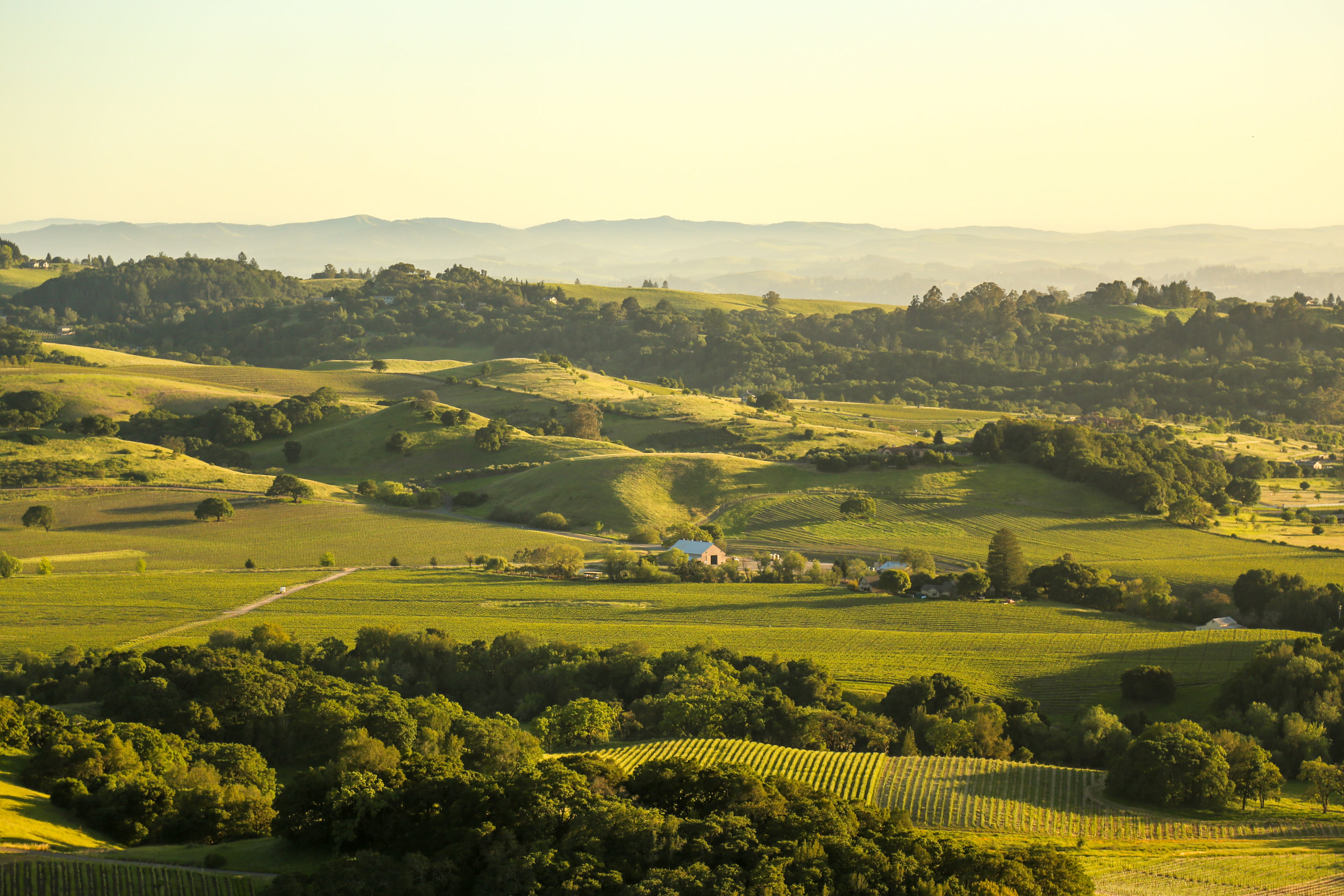 BRING WINE COUNTRY - HOME WITh YOU