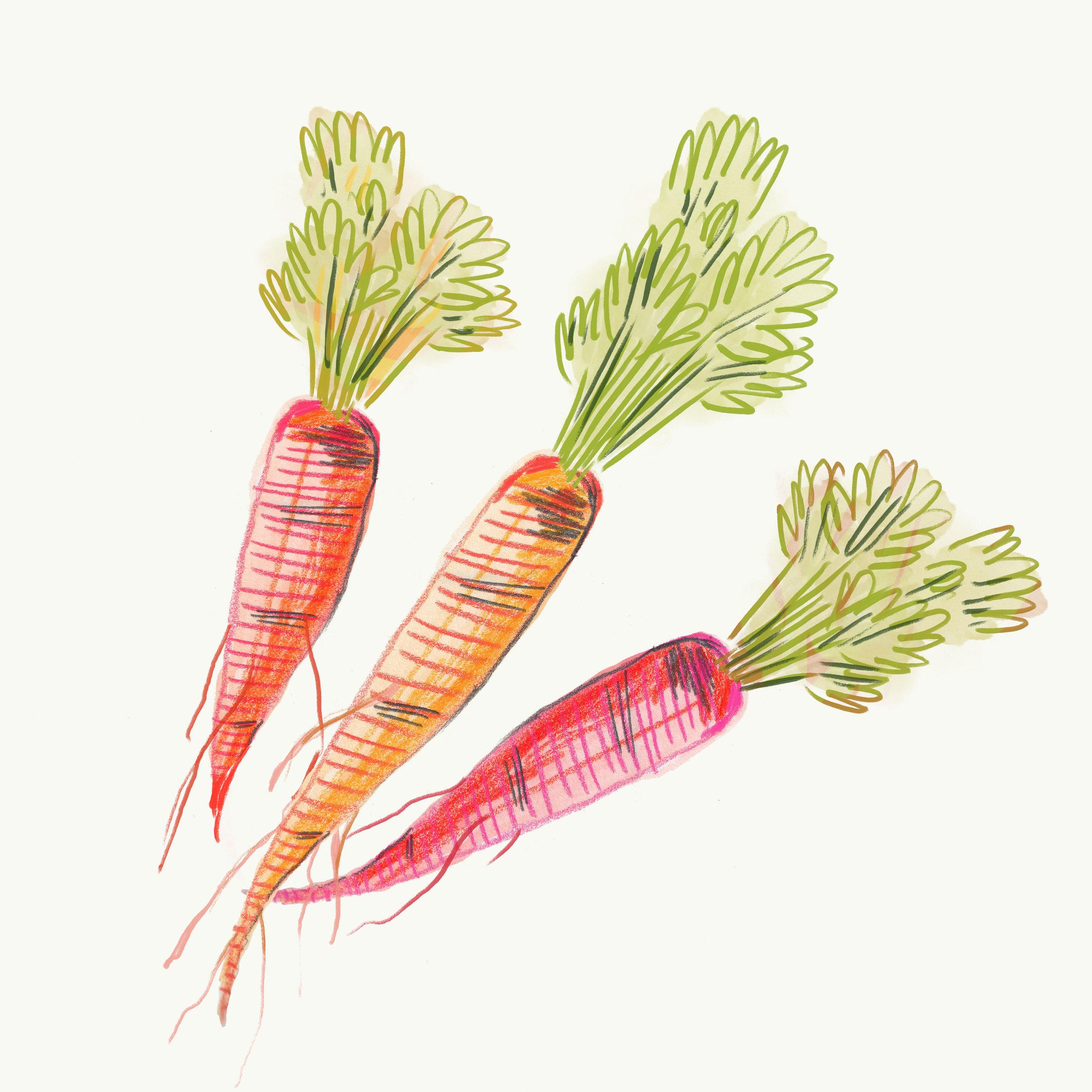 012-Carrot.jpg