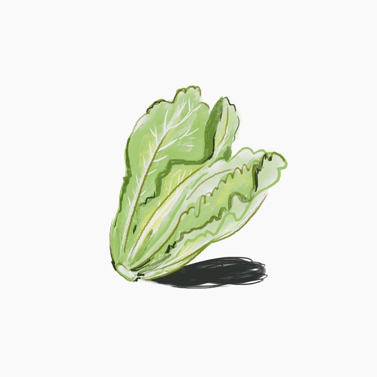 024-Lettuce.jpg