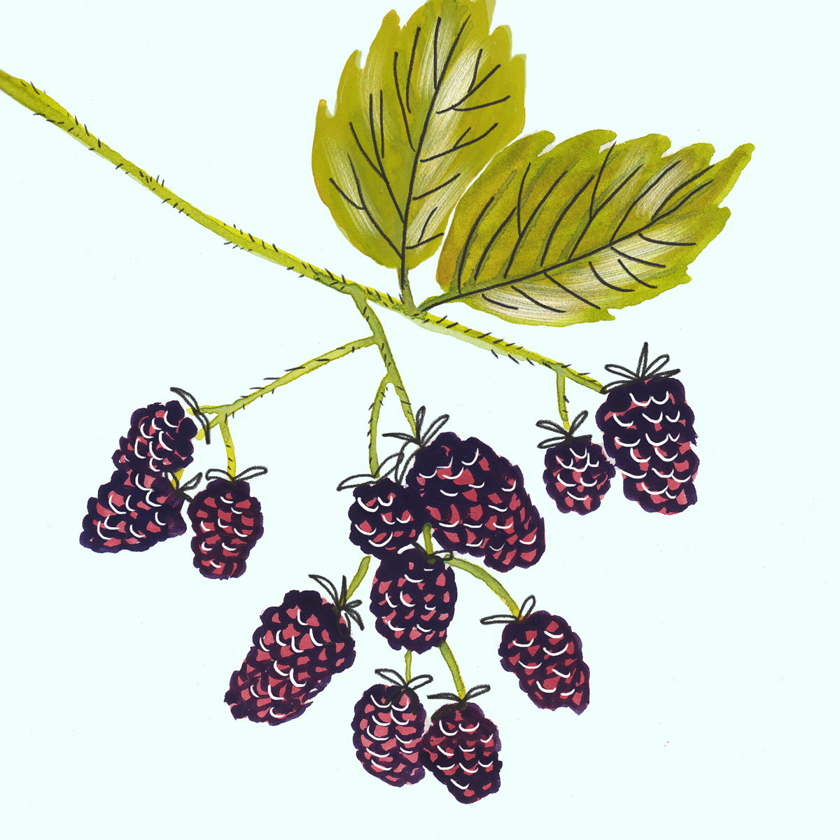 032-Blackberries.jpg