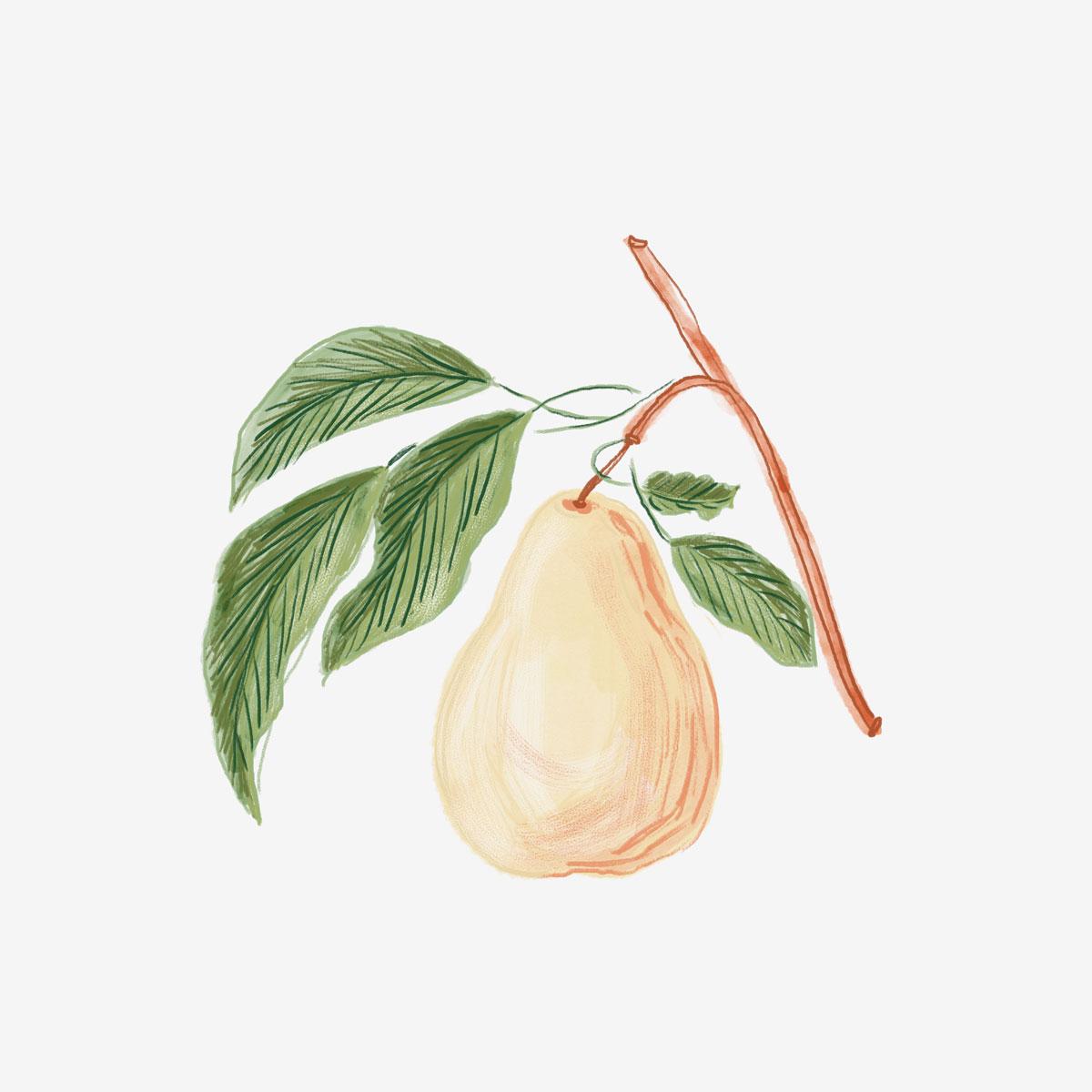 046-Pear.jpg
