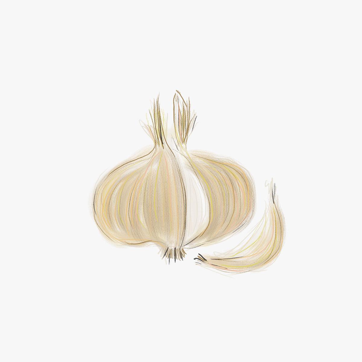 052-Onion.jpg