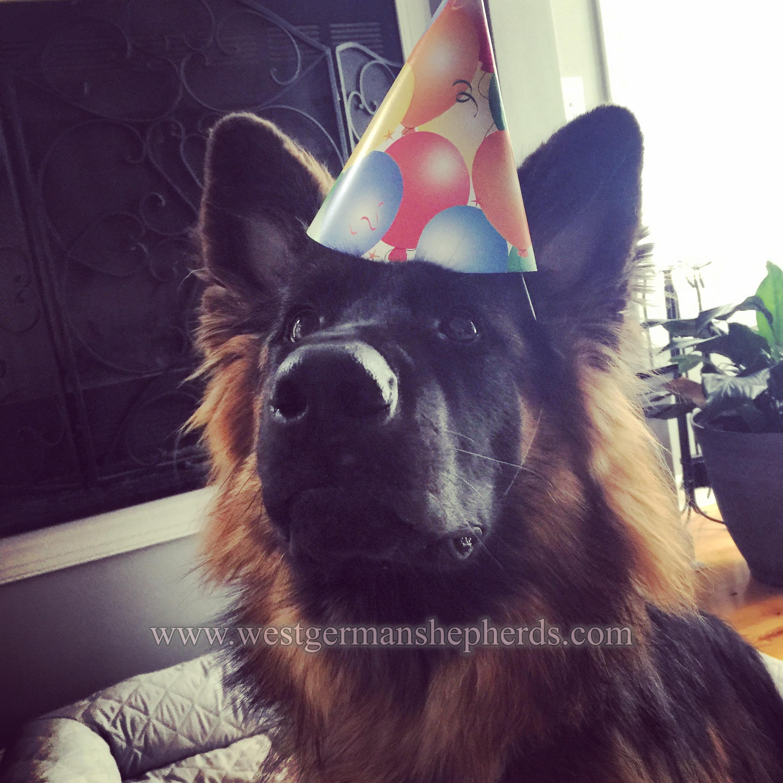 adeline celebrates her first birthday