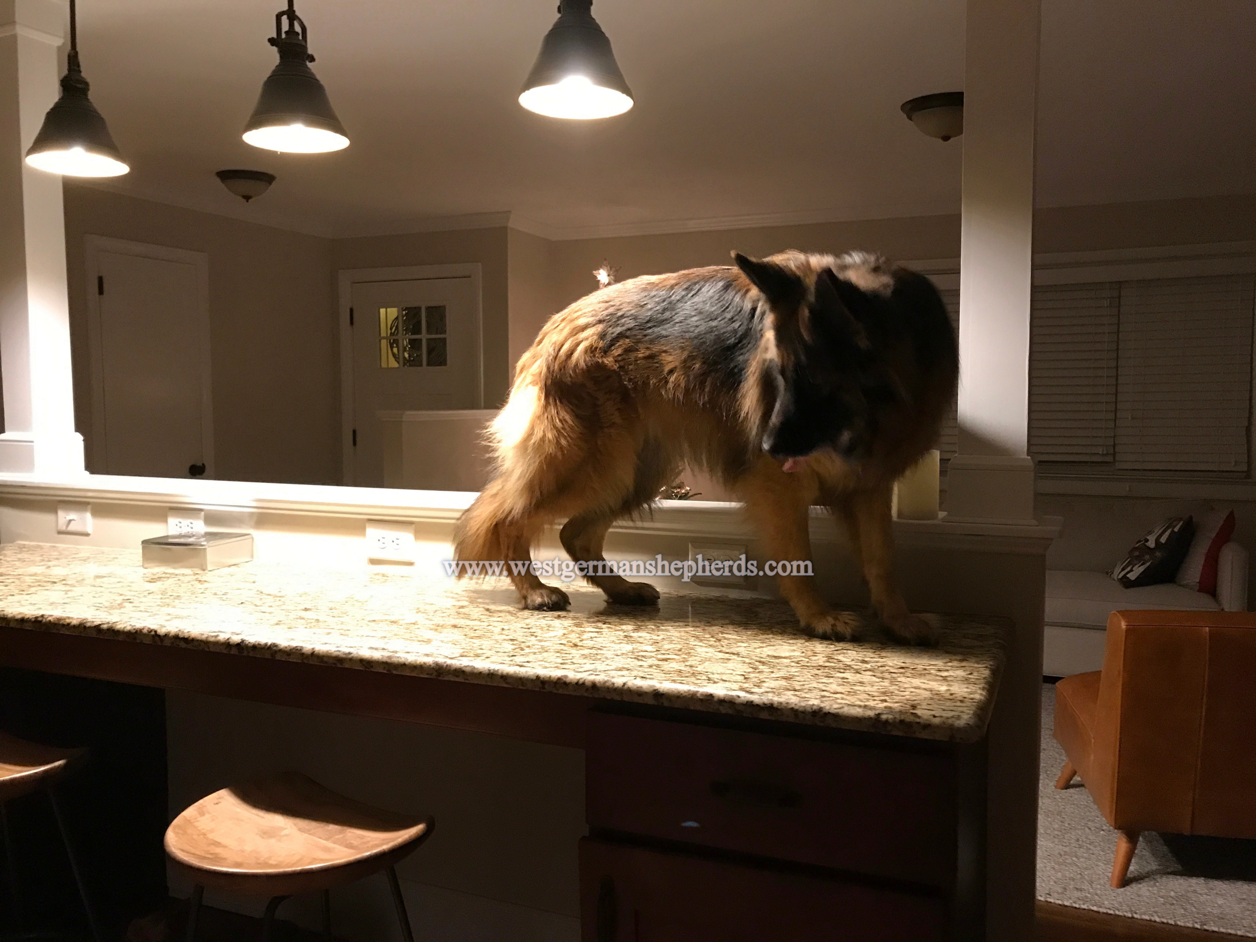 BUSTED: riley caught while countertop surfing