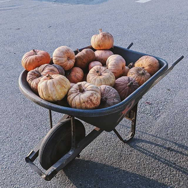 Closing pumpkin season with pumpkin arrangement workshop this year!