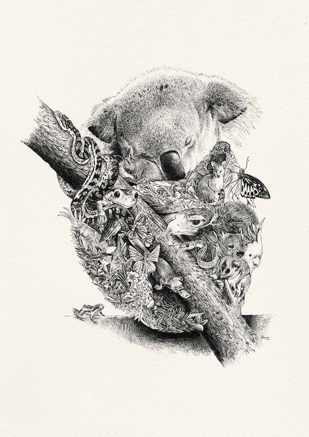 Koala Illustration by Nathan Ferlazzo