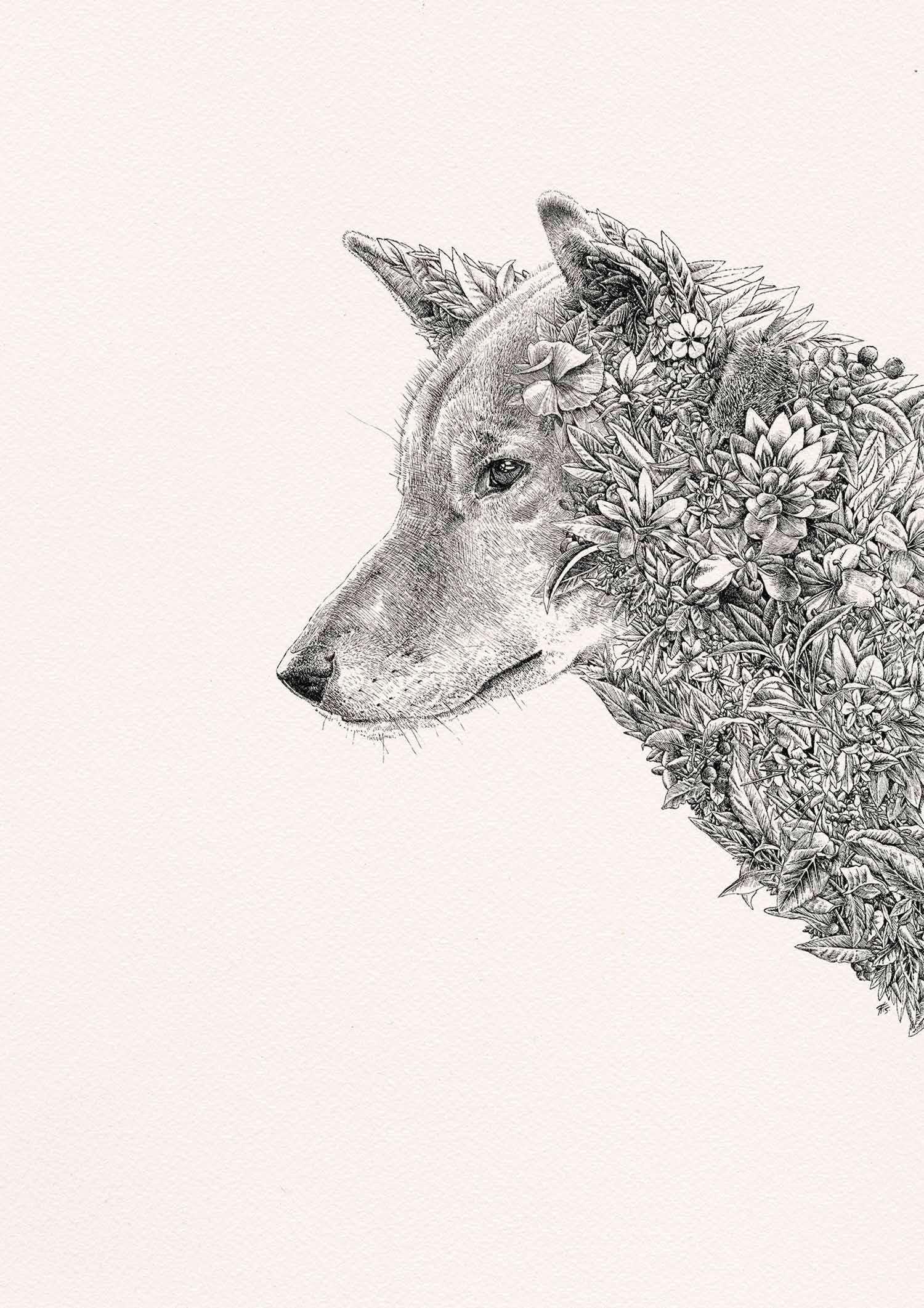 Dingo Illustration by Nathan Ferlazzo