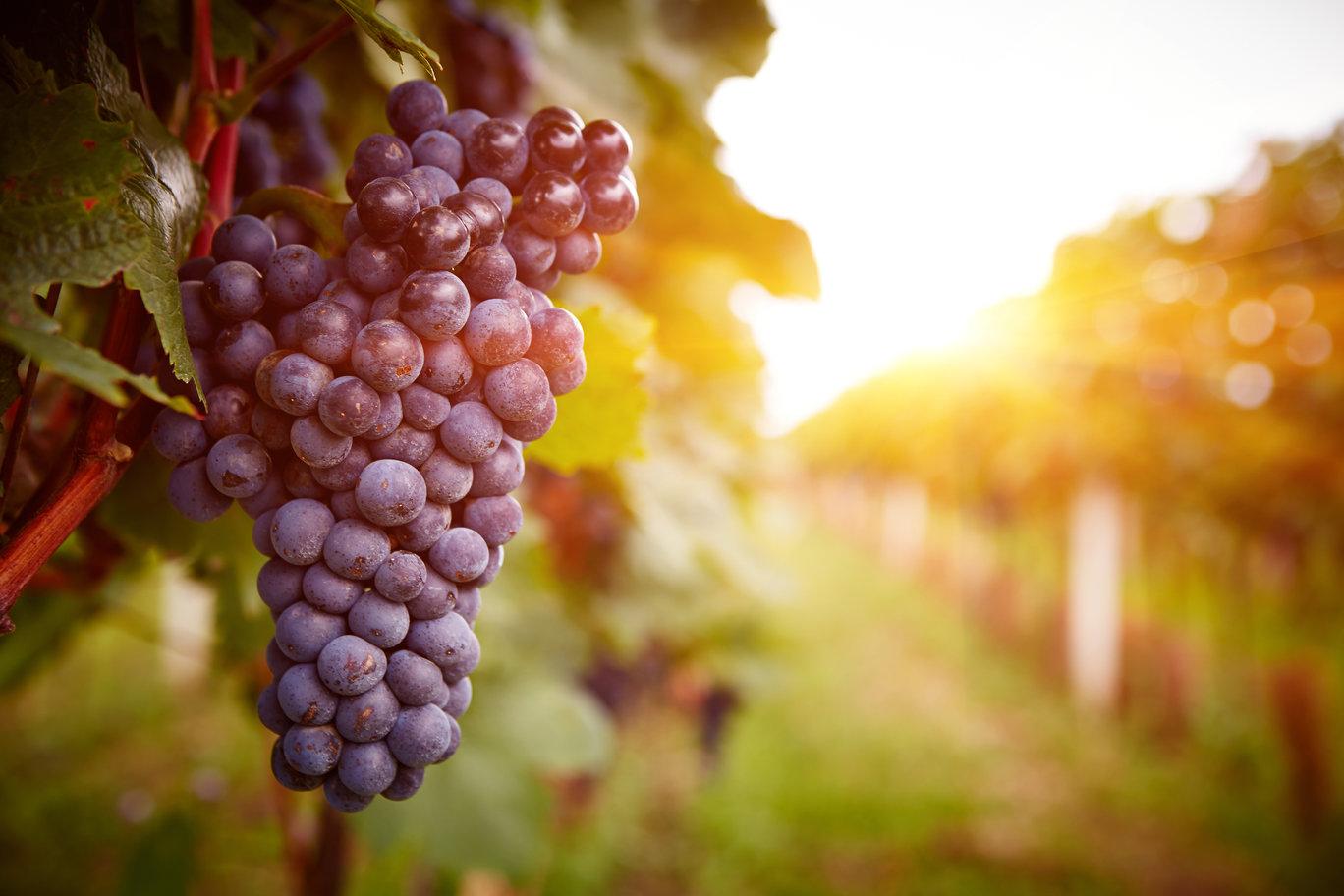 rutherglen_wine_region.jpg