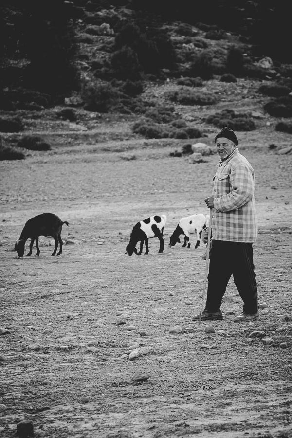 Sheep in Atlas Mountains, Morocco.  Farmer and his sheep.