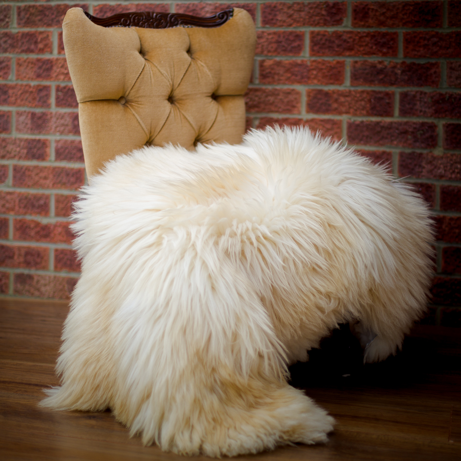 Long-hair bronze / cream sheepskin rug