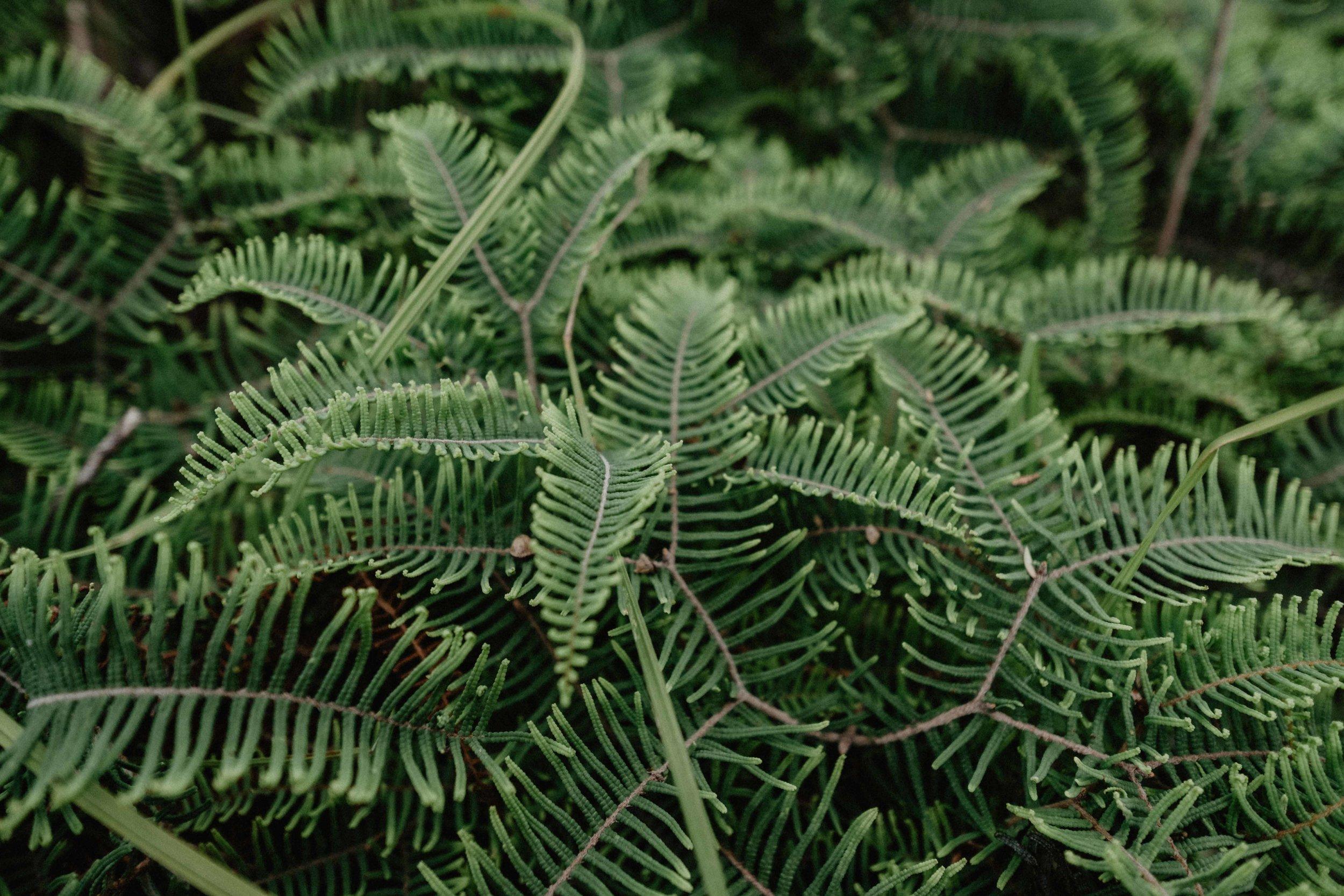 Comme tous les jours, la nature et la diversité de plantes ne cessent de nous émerveiller... :)