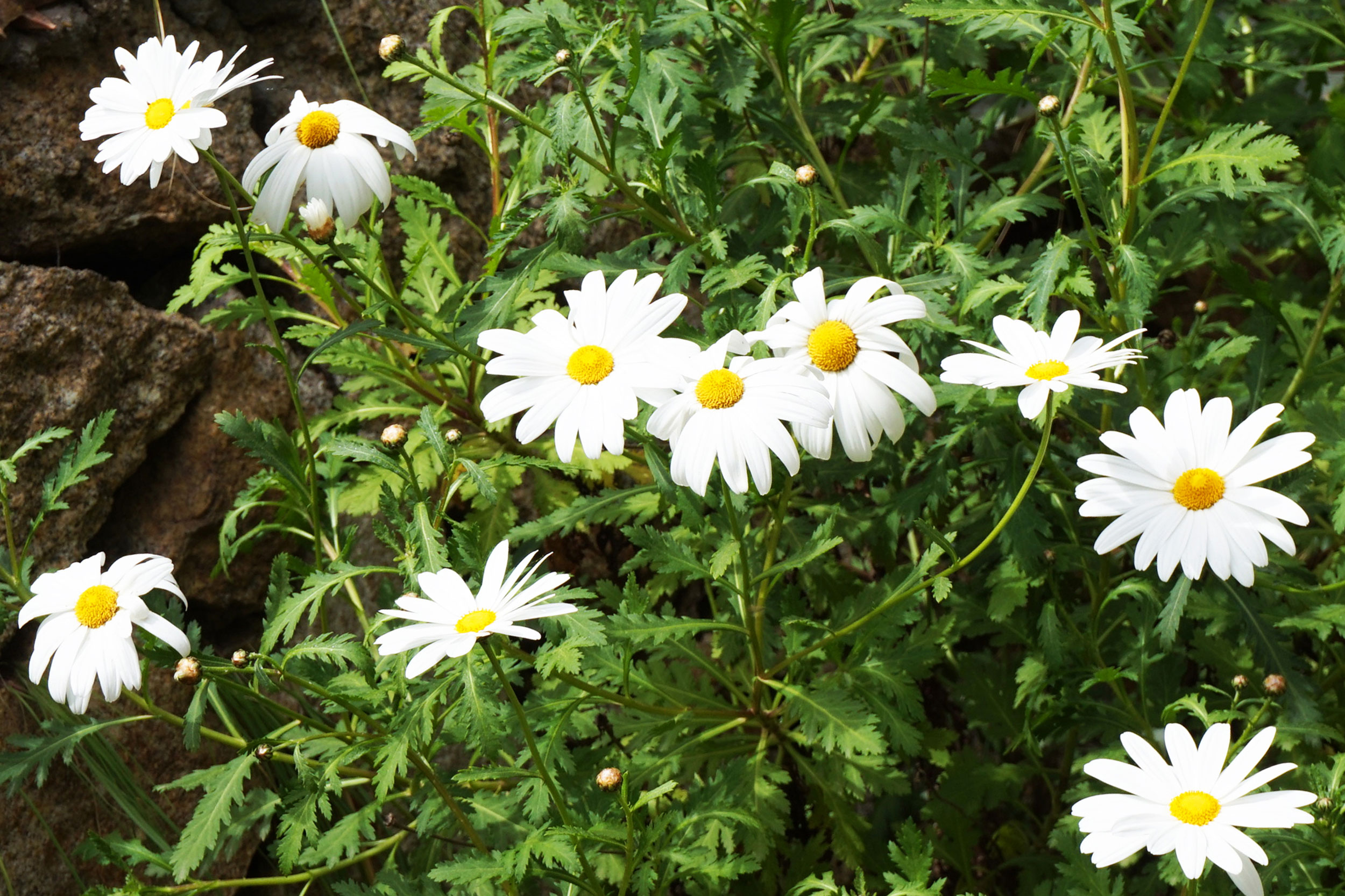 6_fiori.jpg