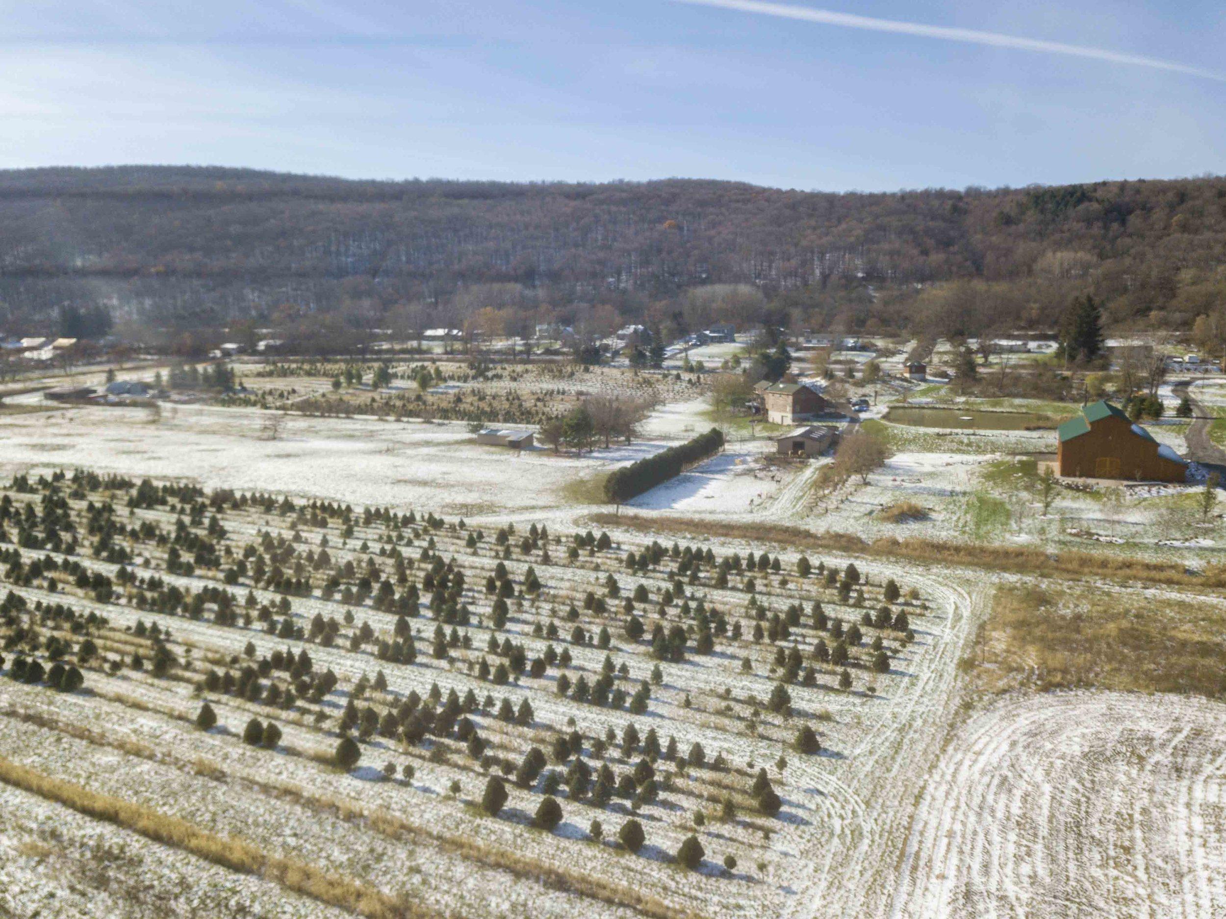 Christmas Tree Farm_4.jpg