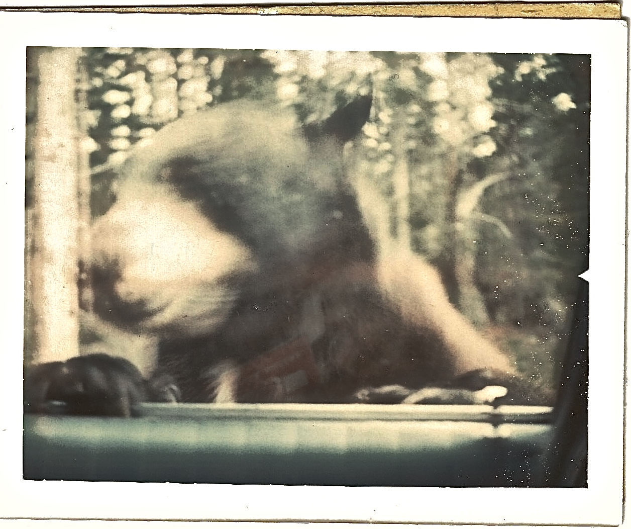 Look closely. You can see the bear's claws inside the car, and the reflection of an empty box of cookies...