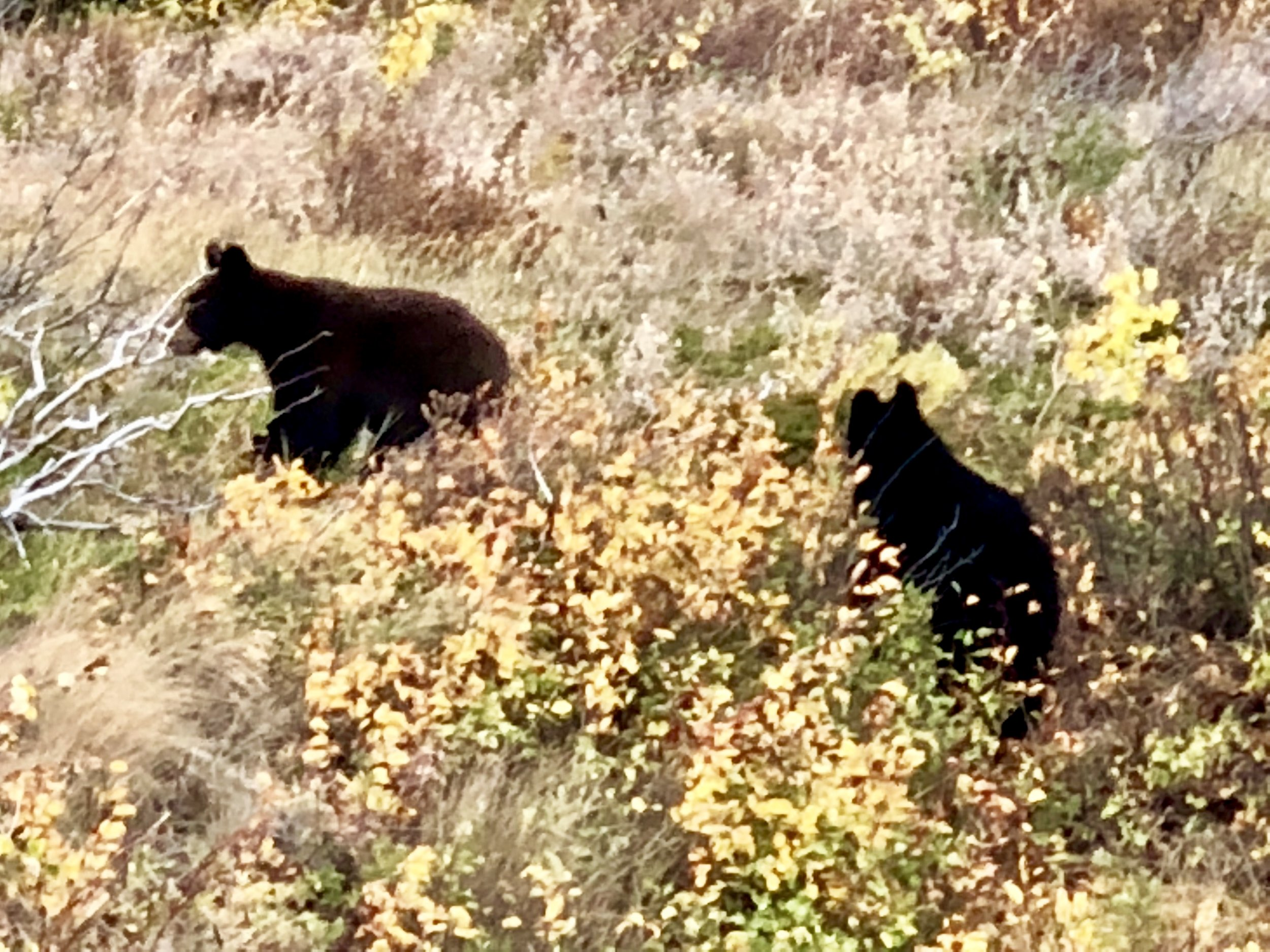 You know what they say about bear cubs. When you see them, look out for mama. We did. She ignored us.
