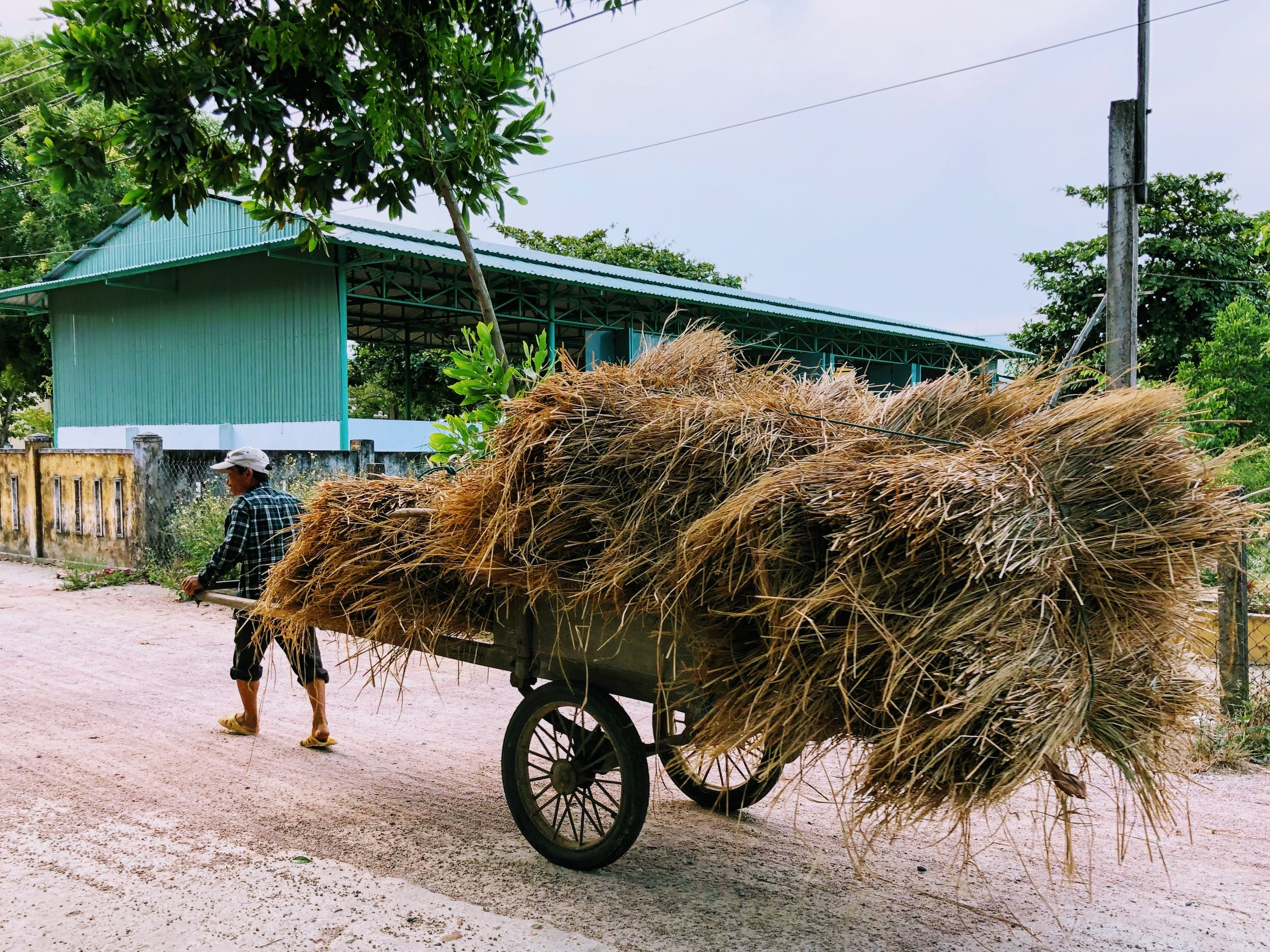 Hay to feed the local livestock, delivered on foot.