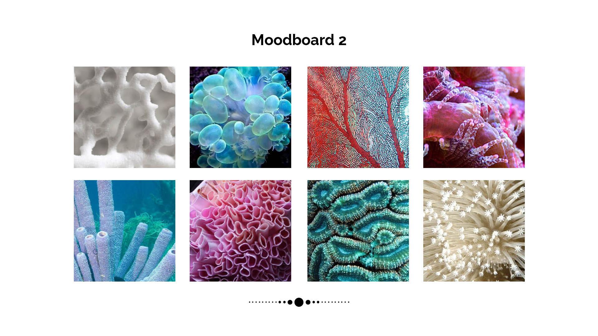 Corals 7.jpg