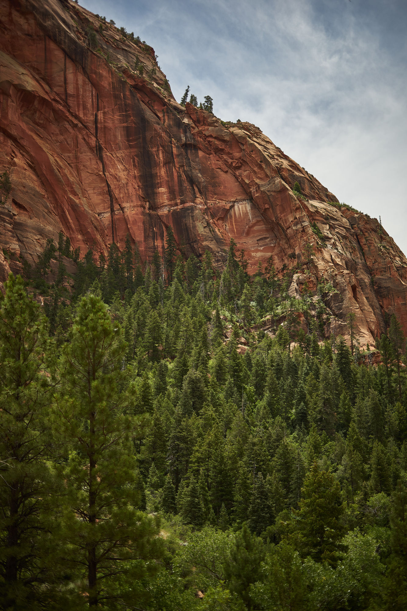 Kolob Canyon in Zion National Park is a beautiful part of the park that's perfect for people who want to escape the crowds! Click through for a complete guide to Kolob Canyon hiking by Amanda Outside - you're go-to source for hiking and camping. Photo by Nick Roush Photography.