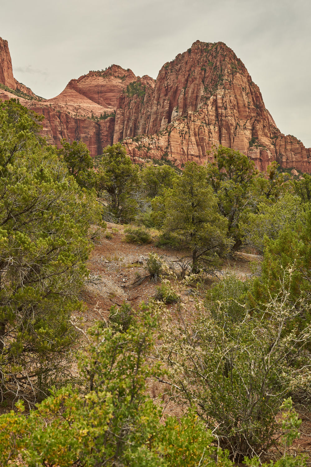 Your complete guide to Kolob Canyon hiking! This is a view from the La Verkin Creek Trail in Zion National Park. www.amandaoutside.com #zion #backpacking #utahhiking