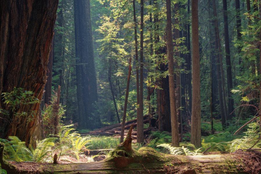 California, USA -