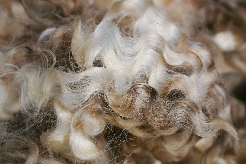 joma wool 1.jpg