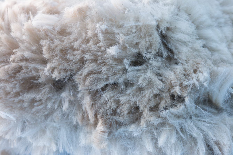 joma wool 2.jpg