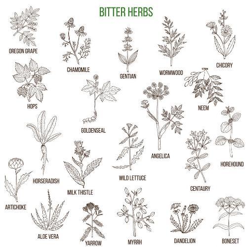 bitter-herbs-collection-vector-13716265.jpg