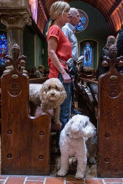 blessing-of-the-animals-186_48861936591_o.jpg