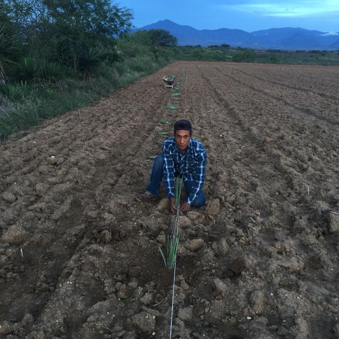 Ageo Cortes Planting Web.JPG