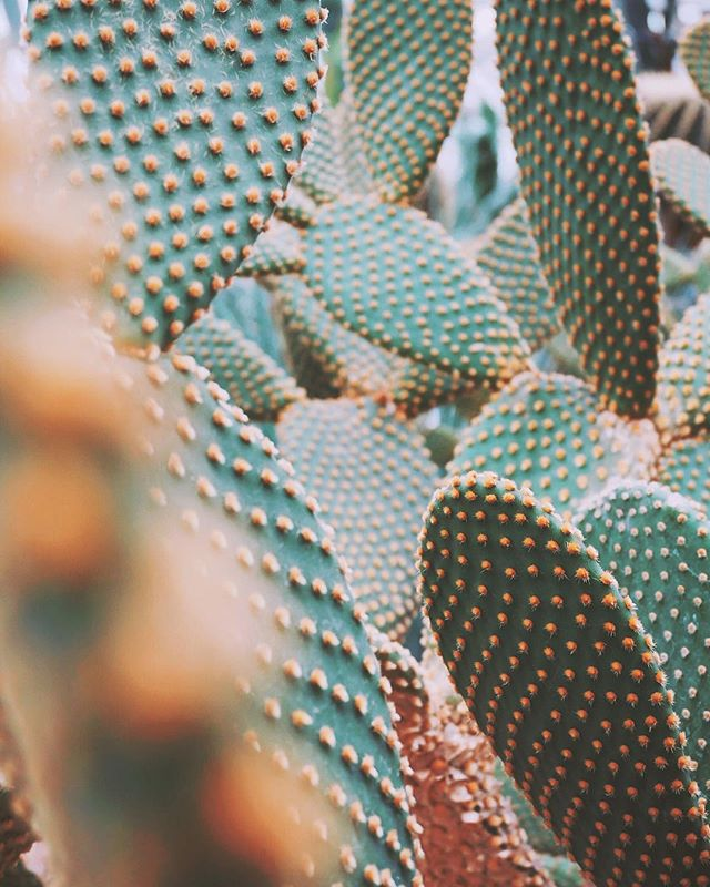 Food. Water. Medicine.  Yes, the Prickly Pear Cactus is protective and resilient. But, look beyond the spines and you'll see it's also a versatile, nurturing plant.  Sometimes, the elements that appear contradictory are intricately complementary.  What opposites do you embody? How are they entwined?